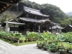 三室戸寺の本堂と蓮