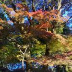 京都の紅葉の穴場 栄摂院 拝観無料なのに素晴らしい紅葉が見れる金戒光明寺の塔頭で本当は秘密にしておきたい場所です。