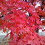 京都に行って紅葉を見て美味しいものを食べて来ようツアー 徒歩に自信がある人におすすめのハードコース お宿は古民家改造のゲストハウスです