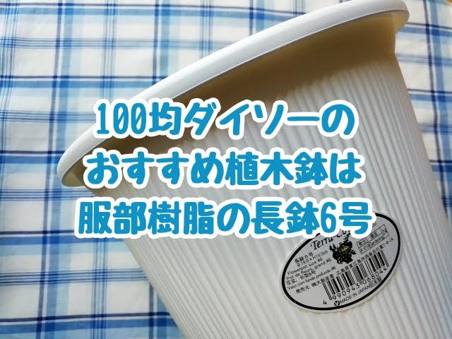 100均ダイソーのおすすめの植木鉢は服部樹脂の長鉢6号