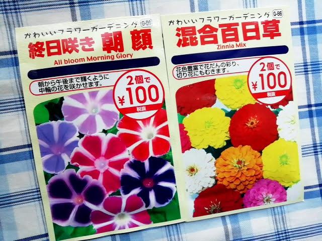 100均ダイソーの花の種 2個で100円の朝顔と百日草