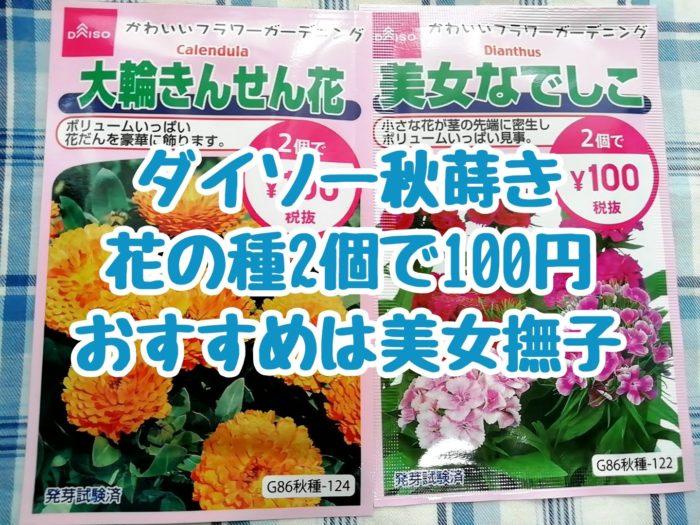100均ダイソーの秋蒔き花の種 2個で100円 美女なでしこと大輪きんせん花