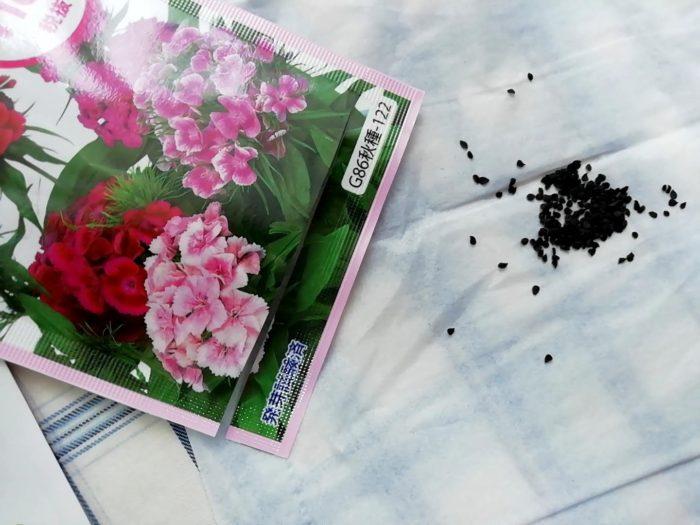 100均ダイソーの秋蒔き花の種 2個で100円 美女なでしこの種の量と大きさ
